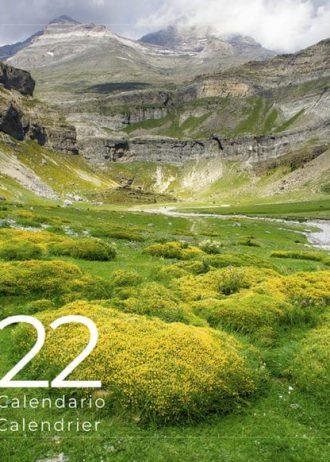 Pyrene_2022-min